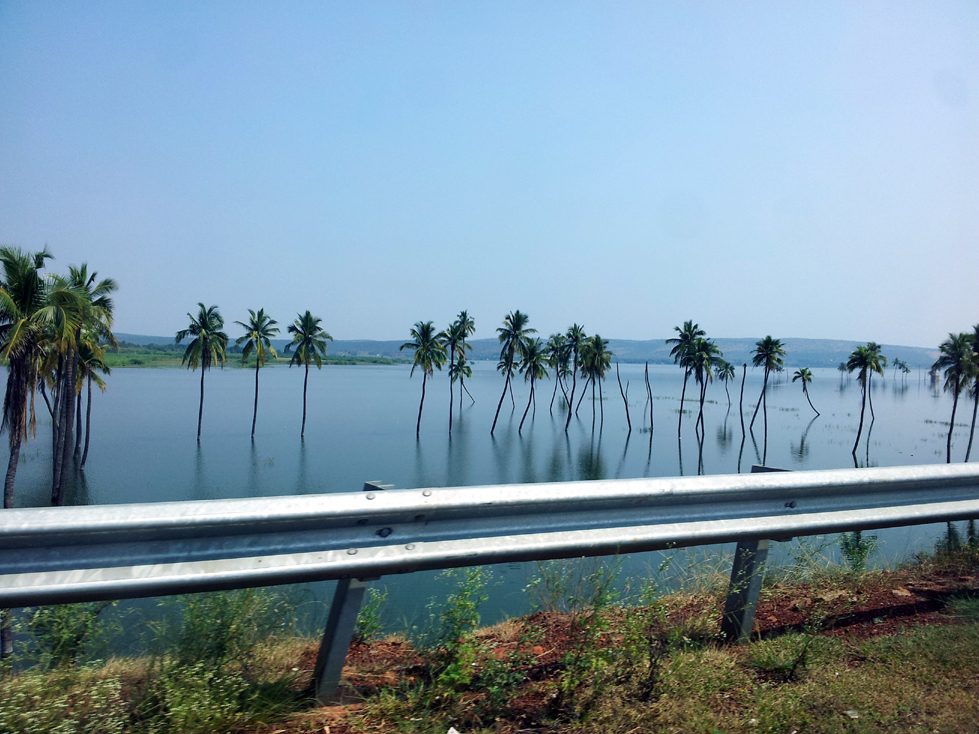 Bagalkot palm trees - An off-the-beaten-path Goan holiday
