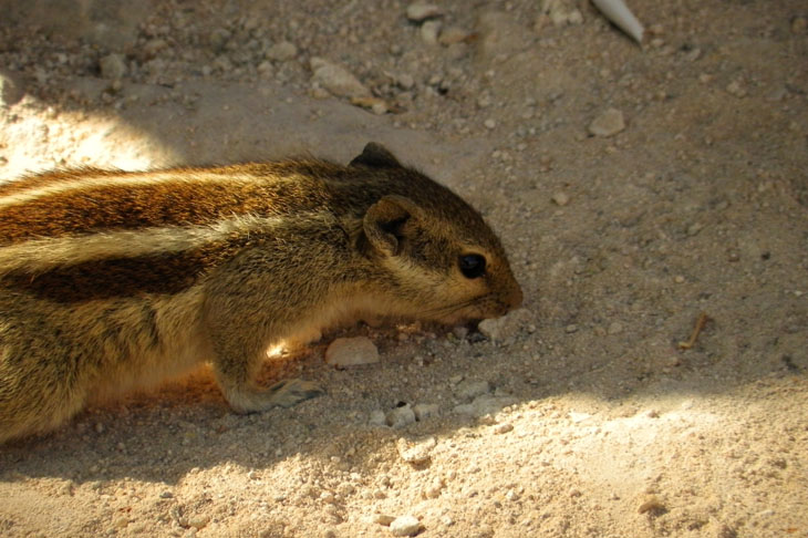 Gujarat_Bhuj_Pragmahal_Chipmunk - The colours of Kutch