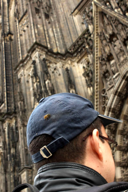 Bee, cap, cologne cathedral - A road trip through Germany, and other ways to pass the time (Part 1): Wuppertal and Cologne