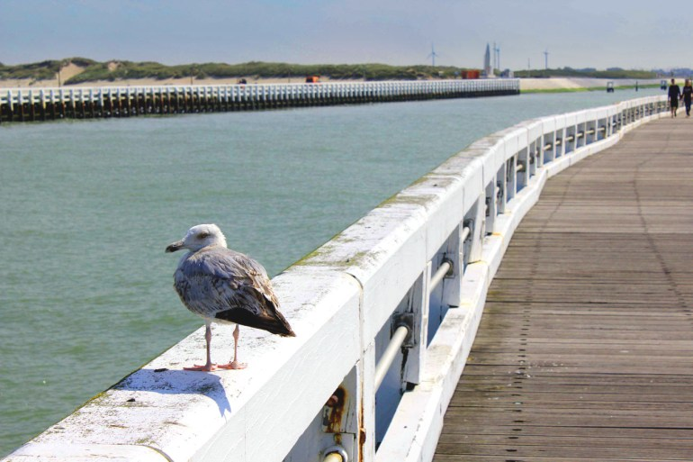 A seagull takes it easy on one of the piers