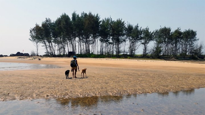 Dogs on beach in Goa - Eight things every first-time dog owner should do (and one that they shouldn't)