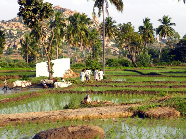 Hampi_GowriResorts_Farmers2 - Magical sights of Hampi