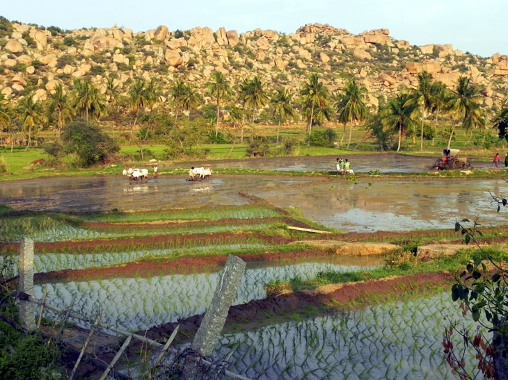 Hampi_GowriResorts_Farmers3 - Magical sights of Hampi