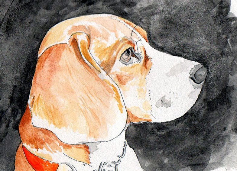 Watercolour portrait of beagle dog, eight things dog owners should do