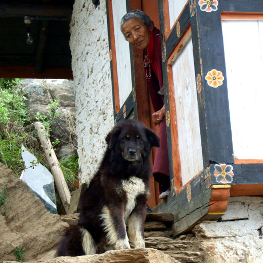 Stray in Bhutan 1