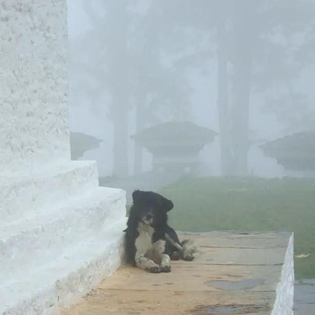 Bhutan - Dochu La Doggie