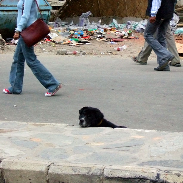 Bhutan - Thimphu doggie