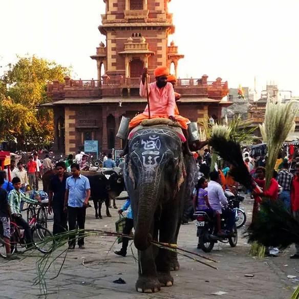 Jodhpur - Sardar market elephant - Eight great reasons why you should visit Rajasthan, 'land of kings'