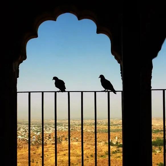Mehrangarh - Pigeons