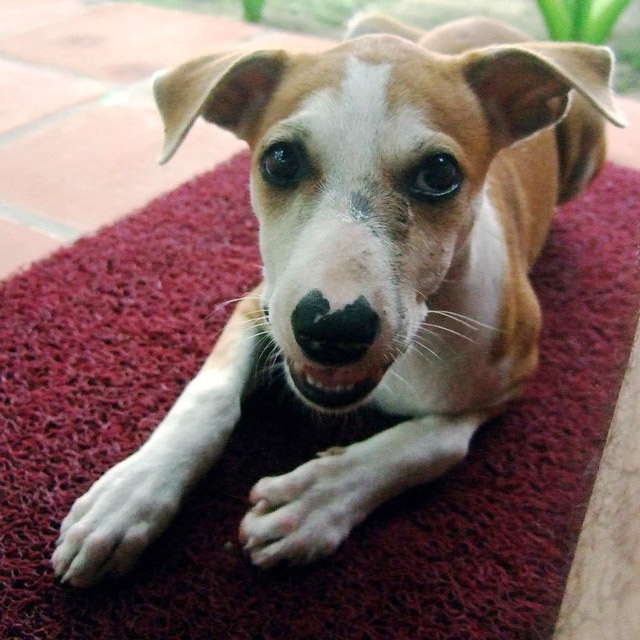 Andamans-Havelock-Beach pup3