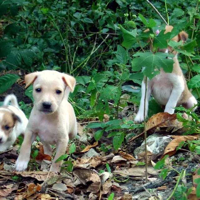 Andamans-Havelock-Beach pups