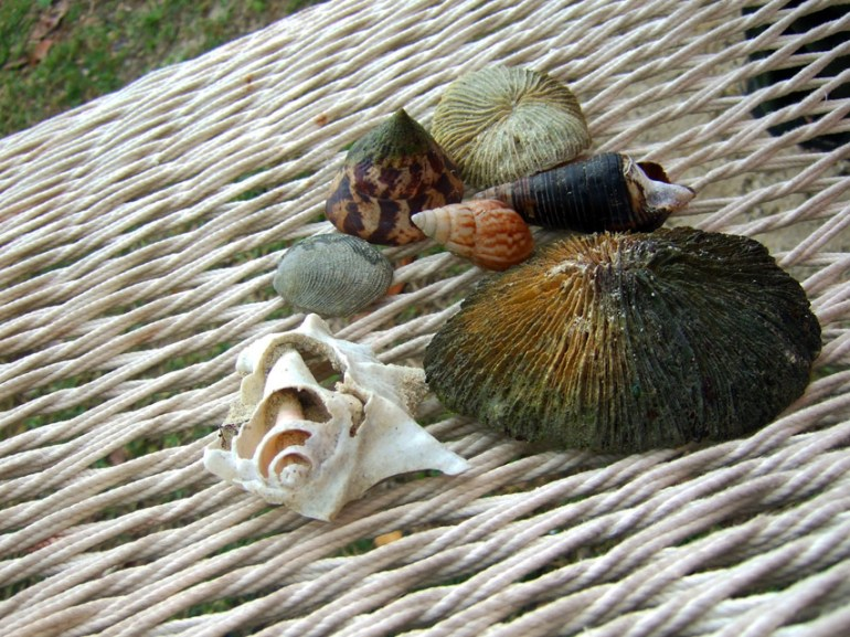 Andamans-Havelock-Shells in hammock
