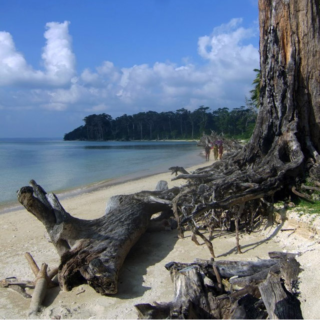 An old tree along the still waters of Wandoor beach - beach pictures from around the world