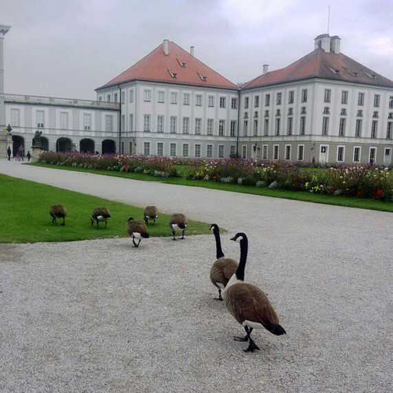 Munich - Nymphenburg geese 1 - Munich and the Oktoberfest: Part 6 of A road trip through Germany, and other ways to pass the time