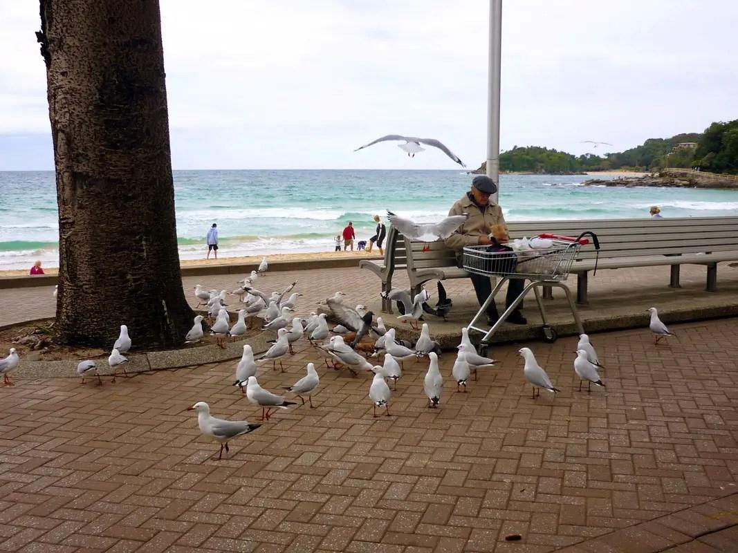 Sydney - Manly feeding gulls
