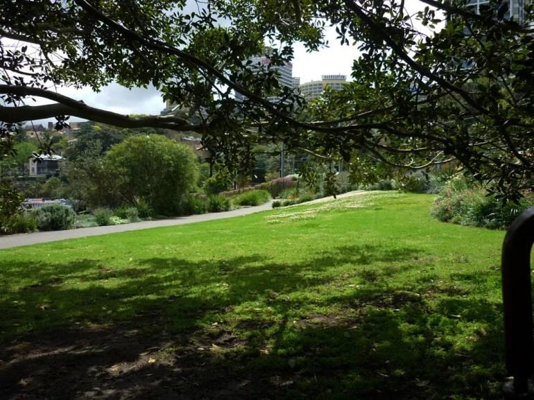 Sydney - McMahons Point tree shade