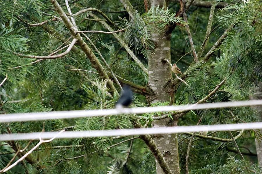 Coonoor - Great escape - Two birds