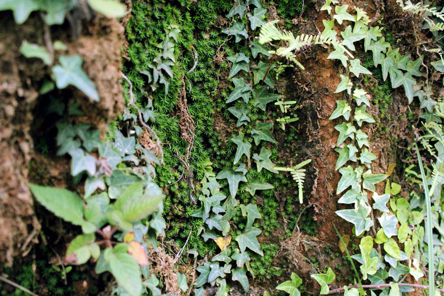 Coonoor - Great escape - Wall leaves