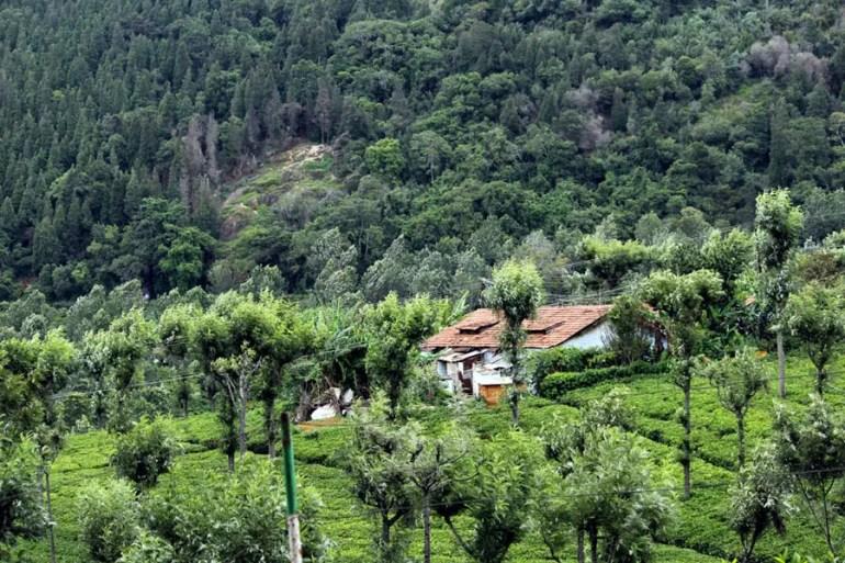Coonoor - Tea plantation - valley house