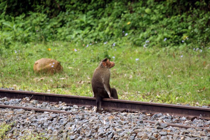 Coonoor - Wellington station monkey