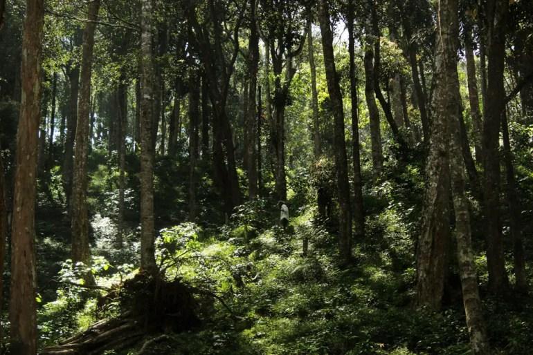 Coorg - abbey falls - plantation