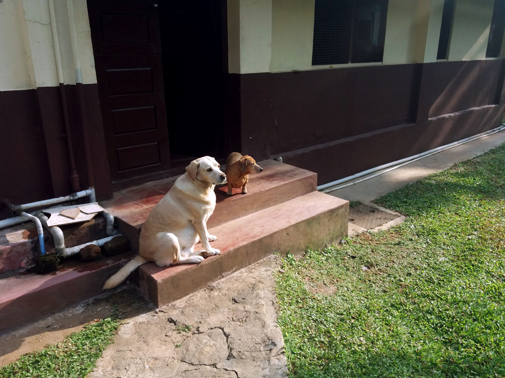 Coorg - Depot estate - Doggies