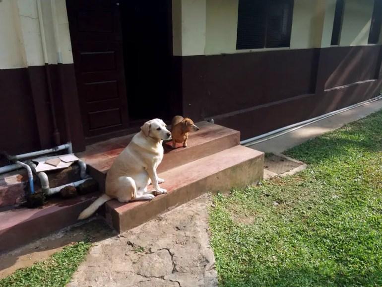 Coorg - Depot estate - Doggies