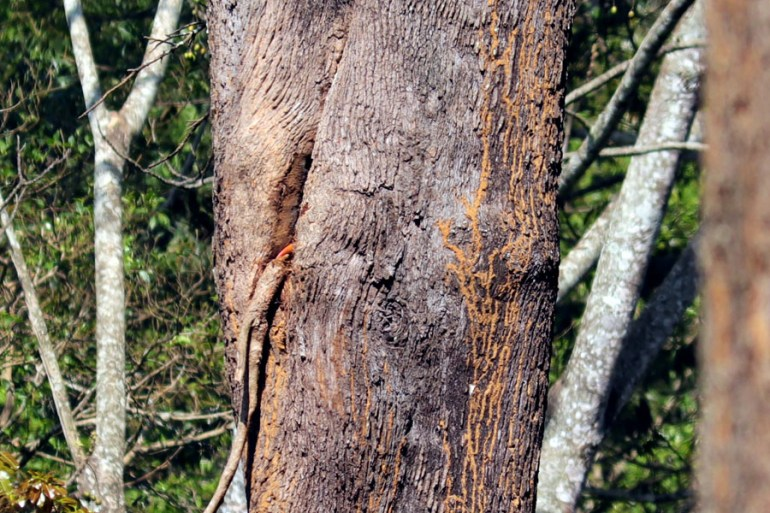 Valparai - Hornbill beak - In the shadow of elephants in Valparai