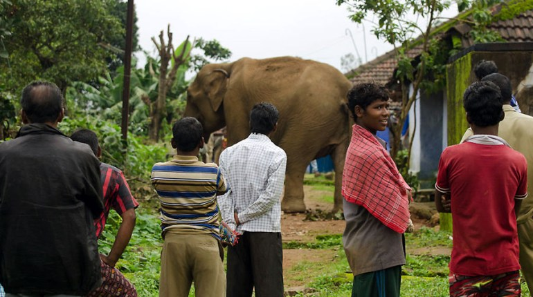 Valparai - NCF - Elephant and people