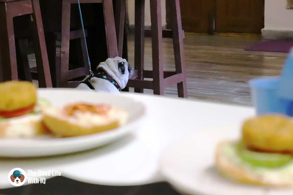 Pug and burgers - The Pet Café: Hyderabad's new pawty hotspot