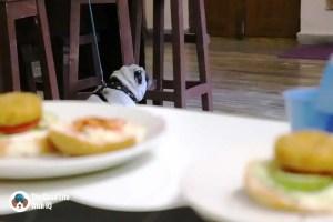 Pug and burgers - The Pet Café: Hyderabad's new pawty hotspot