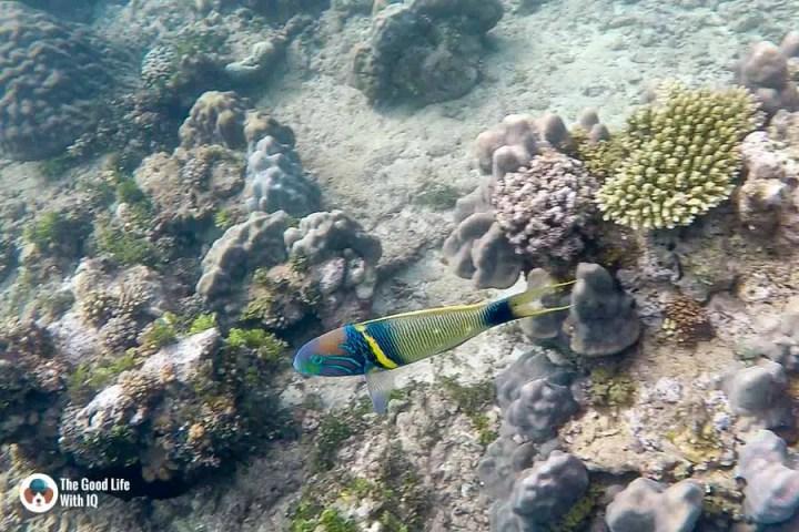 Colourful fish - malindi marine national park