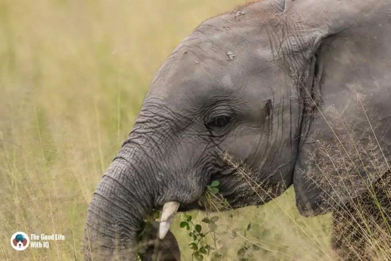 Kenya safari - Amboseli - Baby elephant