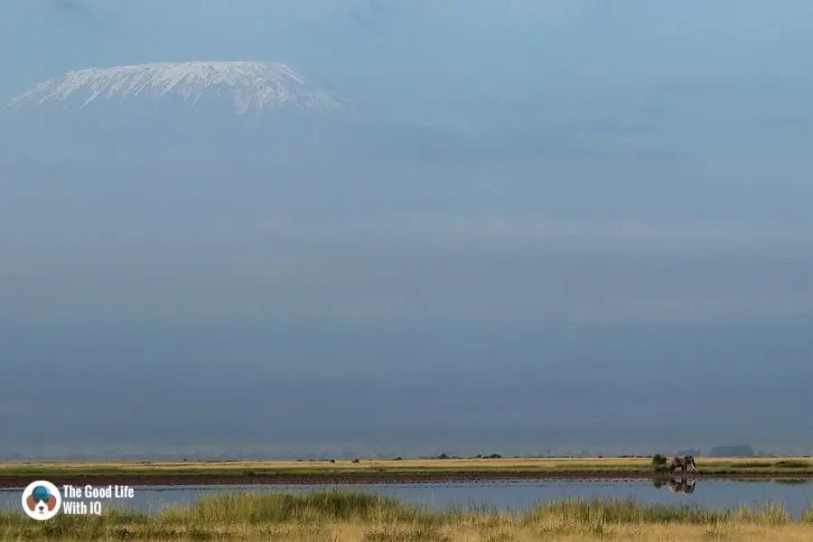 Kenya safari - Amboseli - Kilimanjaro and elephant