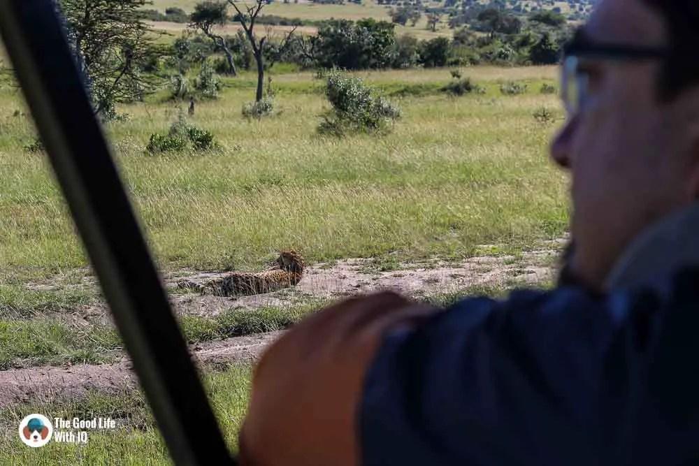 Kenya safari - Masai Mara - IQ and cheetah