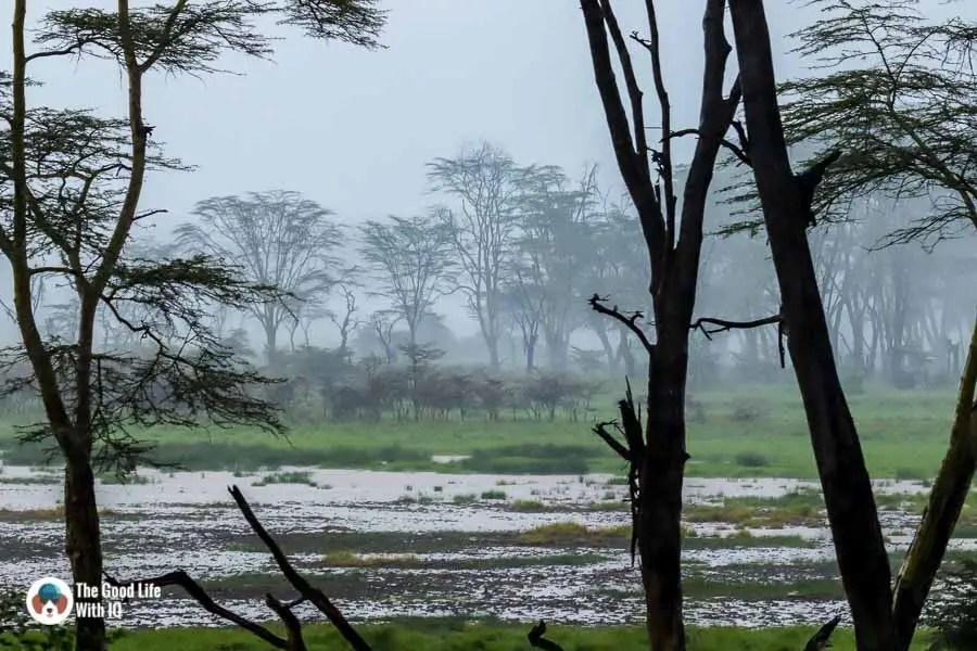 Kenya safari - Nakuru - Ghostly trees