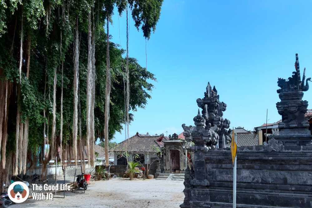 Ficus tree and temple, Lembongan, Bali