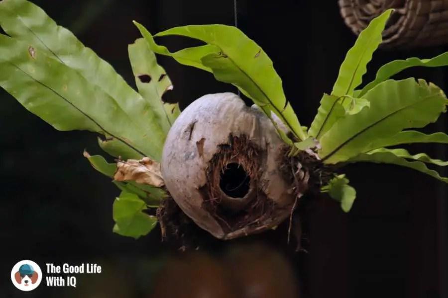 Bird house, Warung Bu Rus - Three days in Ubud, Bali