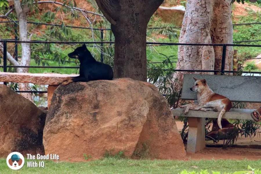Doggies  - Day trip to Lepakshi