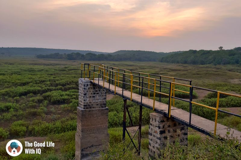 jetty, blackbuck resort - Hyderabad to Bidar road trip