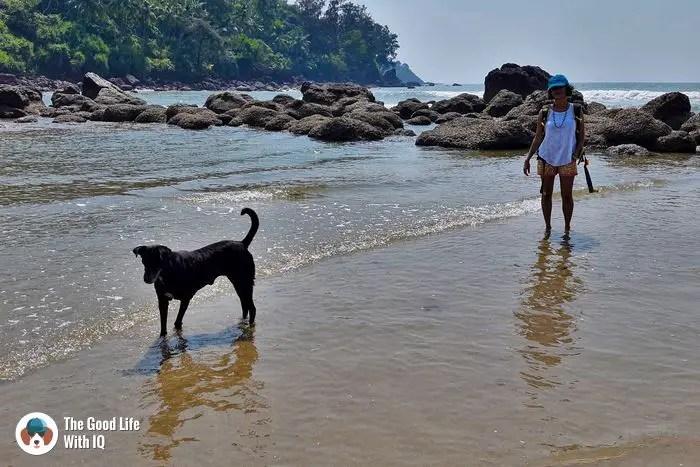 Goa - Cute doggies we've met