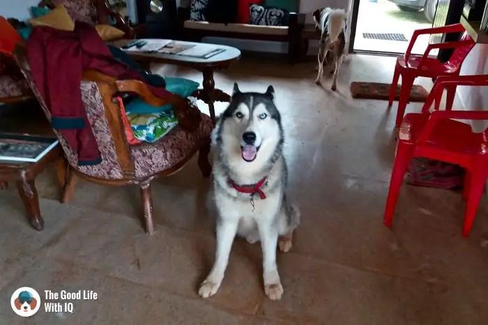 Cute doggie in coonoor