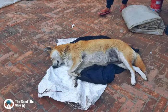 Kathmandu - Cute doggies we've met on our travels
