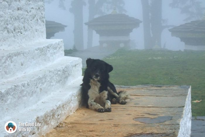 Bhutan - Cute doggies we've met on our travels