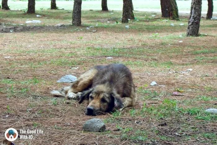 Doggie near Punakha, Bhutan