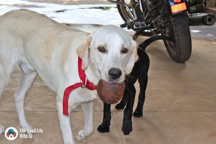 Doggies in Mangalore
