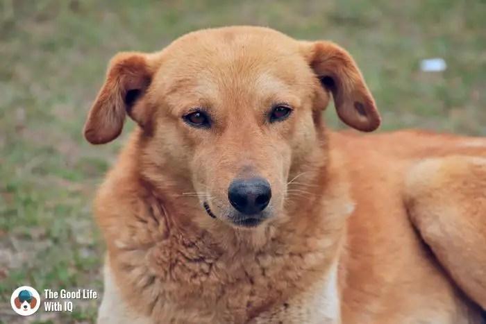 Dharamshala - Cute doggies we've met  on our travels