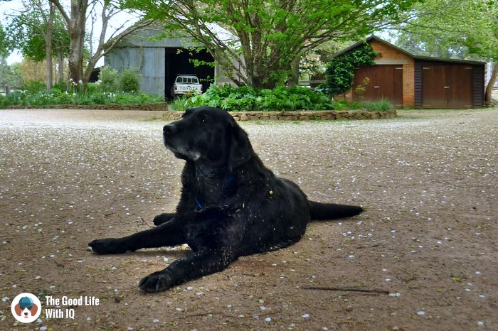 Southern Highlands - Cute doggies we've met on our travels