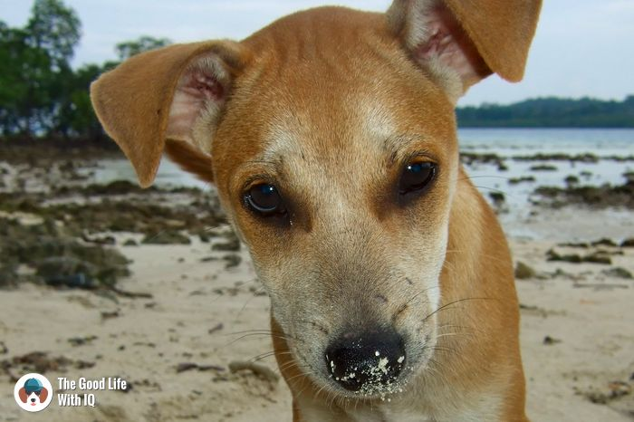 Beach doggie on Havelock Island