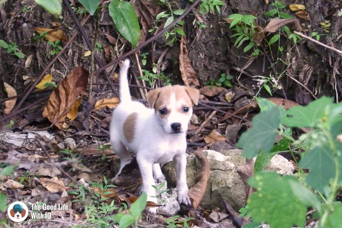 Andamans - Cute doggies we've met on our travels
